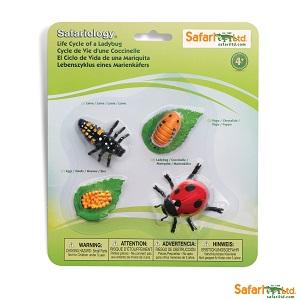 662716 Life Cycle of a Ladybug
