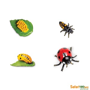Life Cycle of a Ladybug-Individual Items