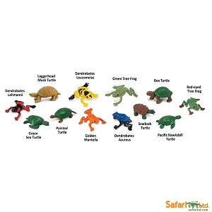 694804 Frogs & Turtles_2