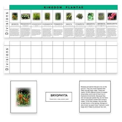 Plant Kingdom Charts