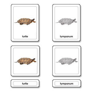 Parts of a Turtle (Reptile)