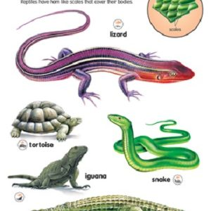Reptiles in the Animal Kingdom
