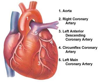 3-D Pumping Heart