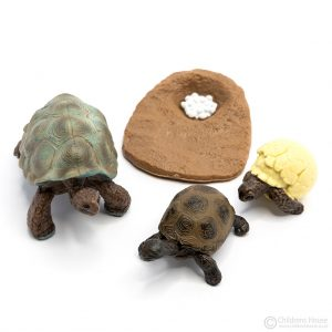 Life Cycle of a Tortoise Objects