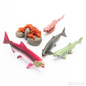 Life Cycle of Trout Objects