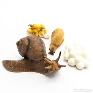 Life Cycle of a Snail Objects