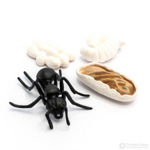 Life Cycle of an Ant Objects