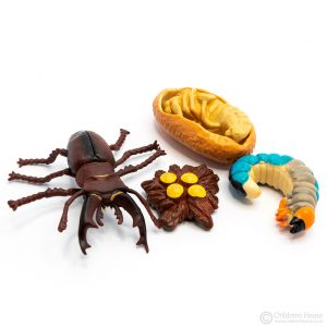 Life Cycle of a Beetle Objects