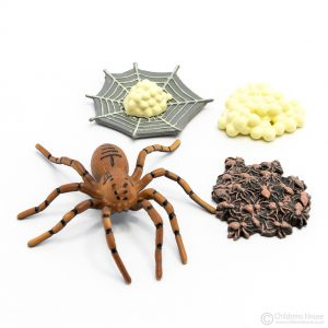 Life Cycle of a Spider Objects