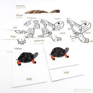 Tortoise Puzzle Activity Set
