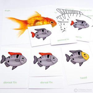 Fish Puzzle Activity Set
