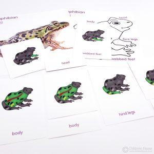 Frog Puzzle Activity Set