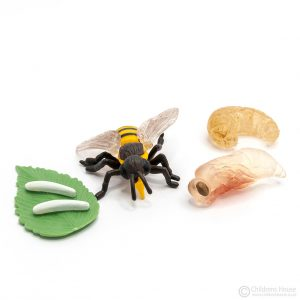 Life Cycle of a Bee Objects