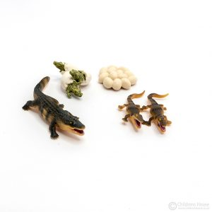 Life Cycle of a Crocodile Objects