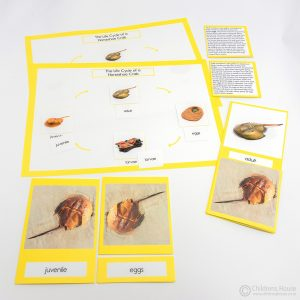 Life Cycle of a Horse Shoe Crab Activity