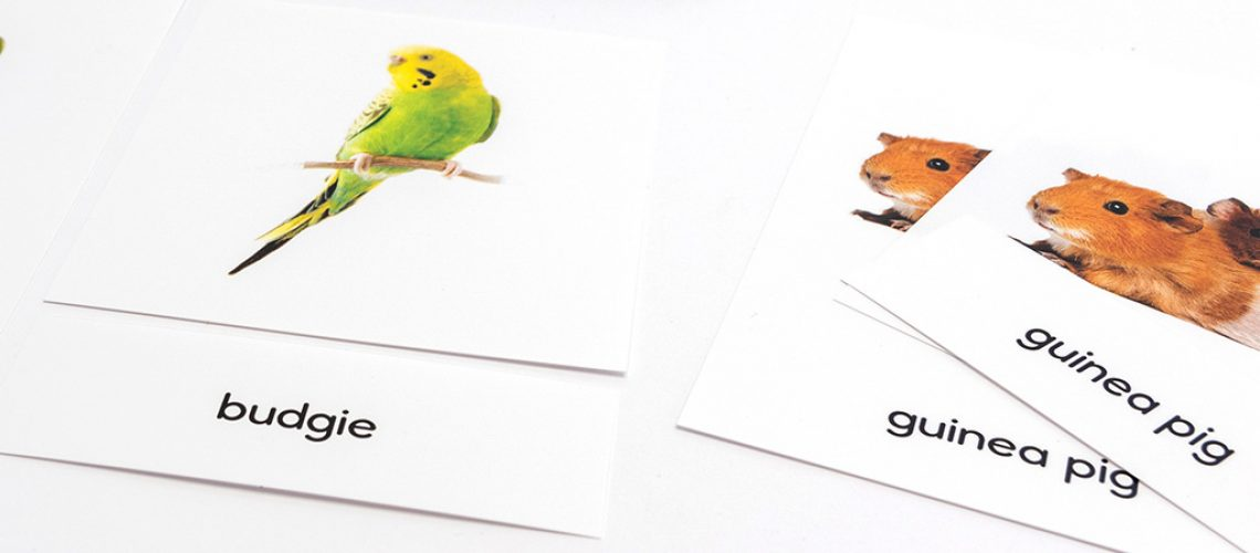 Household Pets - 3 Part Cards